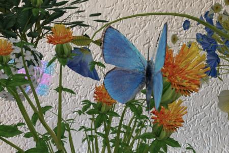 Mission Rette den Schmetterling mit Augmented Reality Episode 1