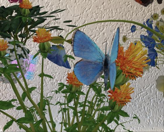 Video – Rette die Schmetterlinge, Episode 1