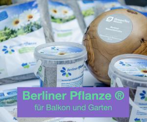 Widget Berliner Pflanze für Balkon und Garten